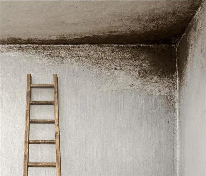 Mold Remediation Mold Remediation by SERVPRO